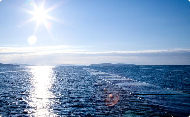 日本でも数少ない「親潮」育ちの海苔